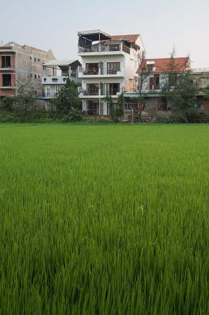Hoi An Green Life Apartment: Building