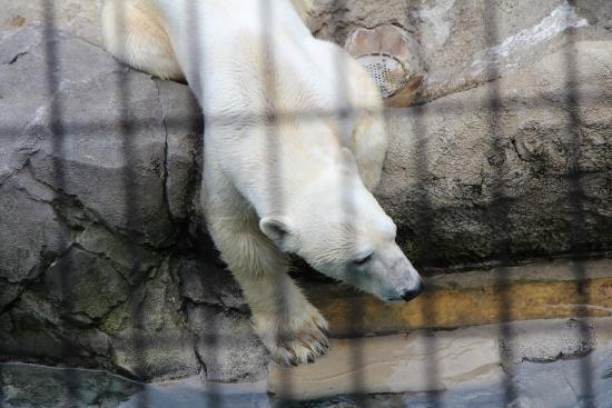 ペンギンのサイズと娘の背比べ - Picture of Asahiyama Zoo, Asahikawa - TripAdvisor