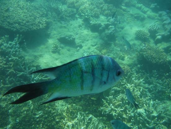 Mantaray Charters: Snorkeling on the reef