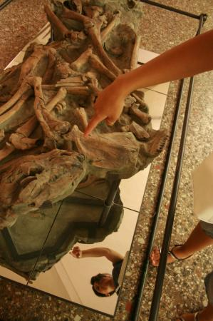 University of Florence Natural History Museum : reperti