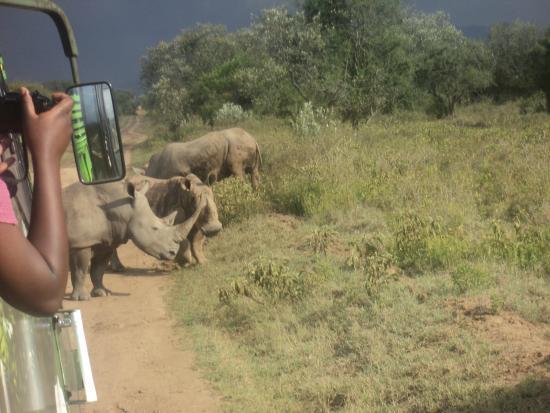 Cruzeiro Safaris - Day Tours : Game drive in Lake Nakuru National Park