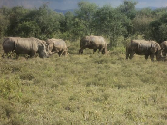 Cruzeiro Safaris - Day Tours : Cruzeiro Safaris Day trip view of white rhinos at Lake Nakuru National Park