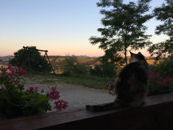 Country House La Valle del Vento : Cat