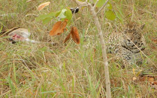 Arathusa Safari Lodge: On Safari