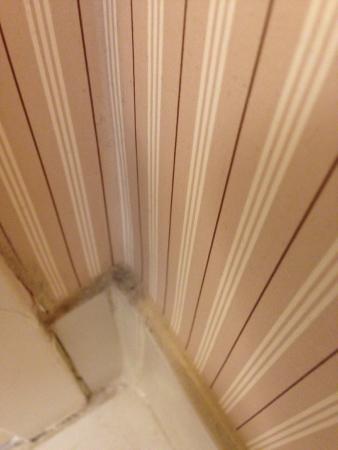Sheraton Edison: never cleaned baseboard in bathroom