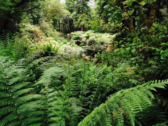 Derreen Gardens: photo9.jpg