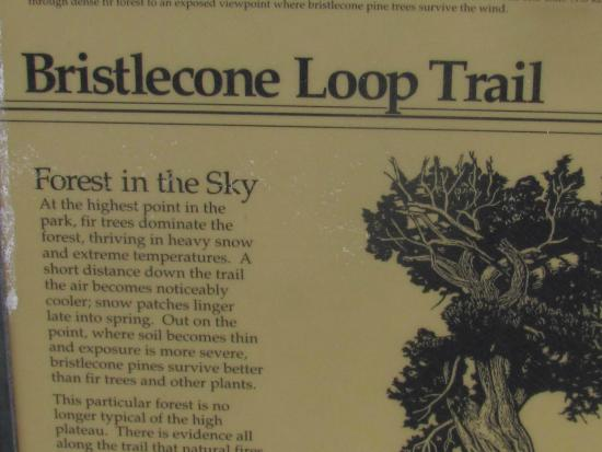 Bristlecone Loop: Information board