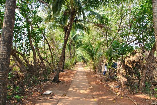 Oasis- Morji Beach Resort: Дорога на пляж