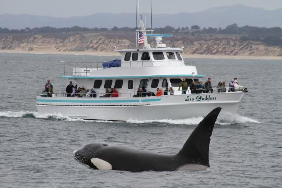 Image result for whale watching monterey