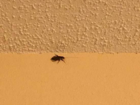 Baymont Inn & Suites Columbia Northwest: Two cockroaches yuck!!