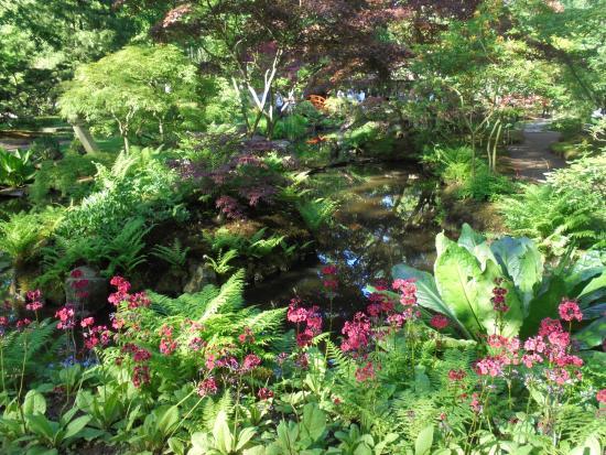 Japanese Garden : PRIMULA JAPONICA