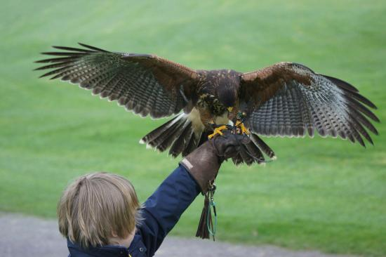 Birds of Prey Educational Centre