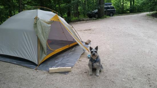 Gifford Woods State Park Dog-friendly c&ing & Dog-friendly camping - Picture of Gifford Woods State Park ...