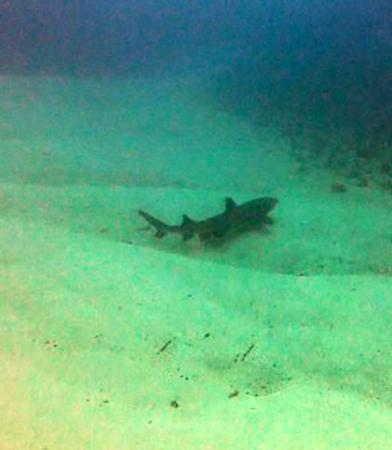 Adventure Cook Islands: One 6ft white-tip shark, just chillin' on the bottom.