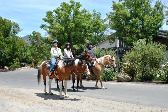 Napa Valley Horse Company: Horses