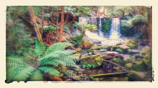 Waterfalls Cafe and Gallery: Russell Falls, Mt Fields National Park, Tasmania