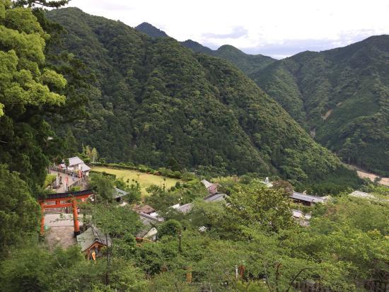 Nachikatsura-cho, Giappone: 原始林