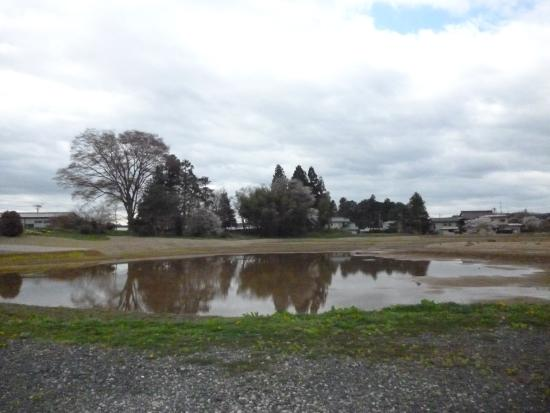 Site of Muryoko-in : 無量光院跡の桜