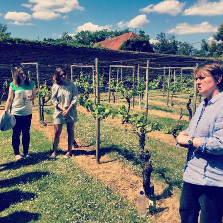 Stanlake Park Wine Estate Aufnahme