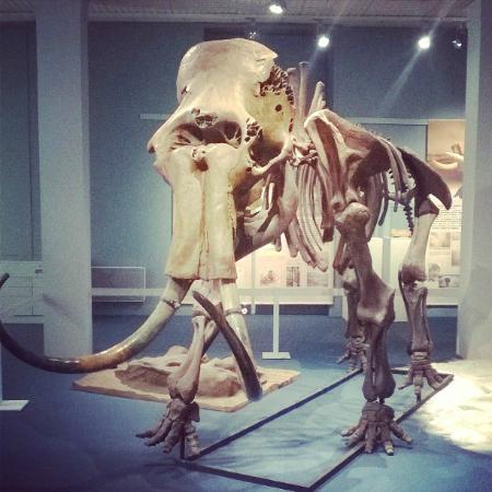 Muséum D'Historie Naturelle De Tours