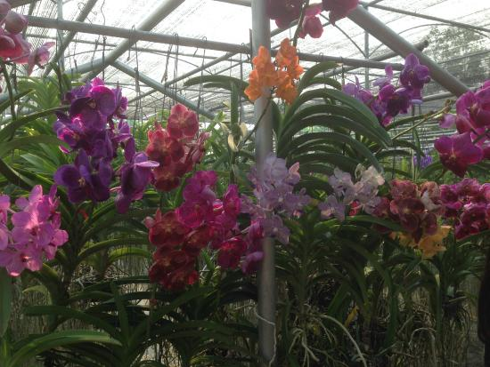 Jumbo Elephant Camp Day Tour: Orchideenfarm
