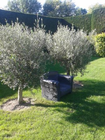 Vernou-sur-Brenne, ฝรั่งเศส: Un peu de lecture sous les oliviers