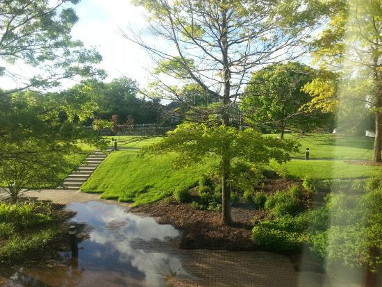 Q Center: Stream and lawn