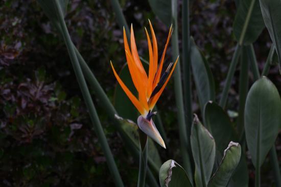 Flores perennes: Cómo crecer y cuidar las plantas perennes | Almanaque del Viejo Agricultor