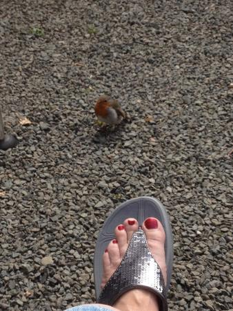 Poston Mill Holiday Home and Touring Park: Robin