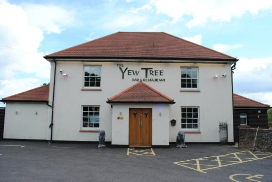Yew Tree The Indian Courtyard