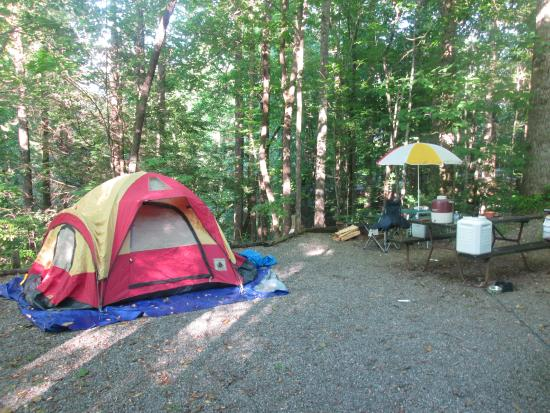 Black Forest Family Camping: Tent site