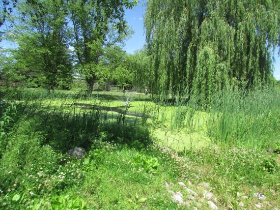 Iowa Arboretum: Pond