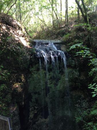 Foto de Falling Waters State Park