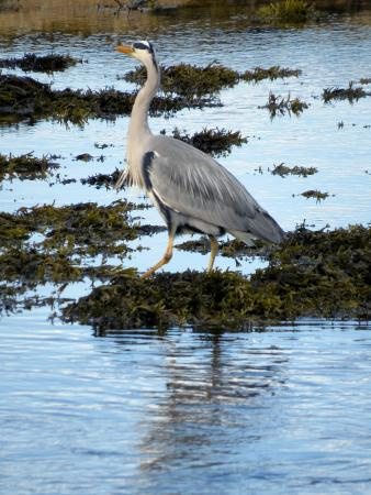 Sannox, UK: Local wildlife