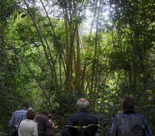 Bosque Santa Lucia