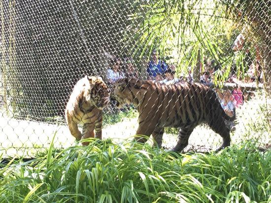 photo2.jpg - Picture of Point Defiance Zoo & Aquarium ...