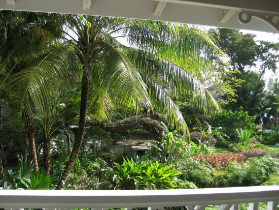 Holetown, Barbados: View from our room, Banana.