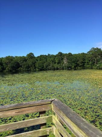Graham Swamp Preserve