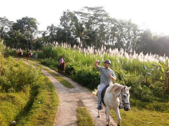 Havana Horses