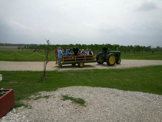 """Wea Creek Orchard: Outside of Barn, loading up to go to the """"Wedding Tree"""""""