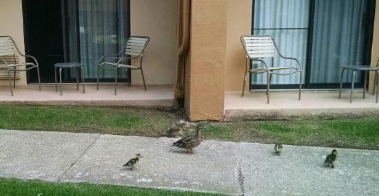 Courtyard Detroit Dearborn: friends on patio