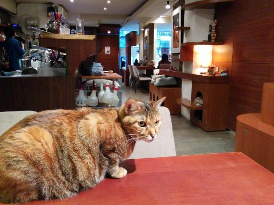 Minimal Cafe: This lovely cat just jumped on me when I sat down here, and started purring and kneading its cla