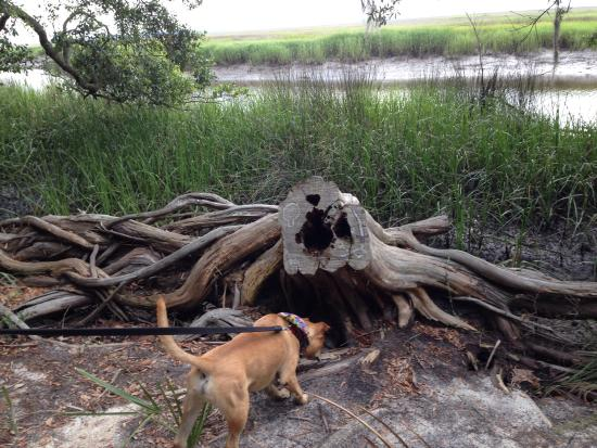 Fort McAllister State Historic Park Campground: Nature trail