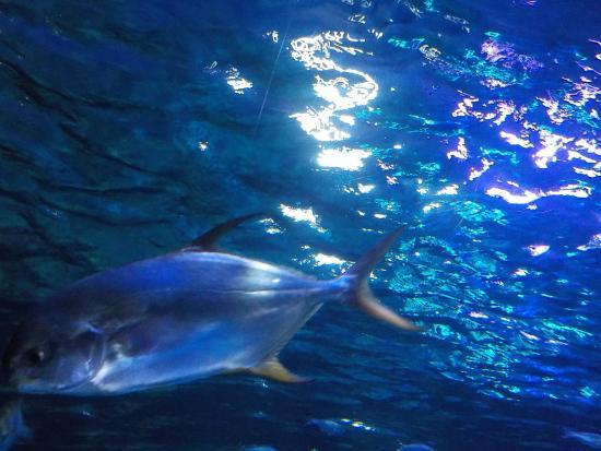 Gardaland SEA LIFE Aquarium - Picture of Gardaland SEA LIFE Aquarium ...