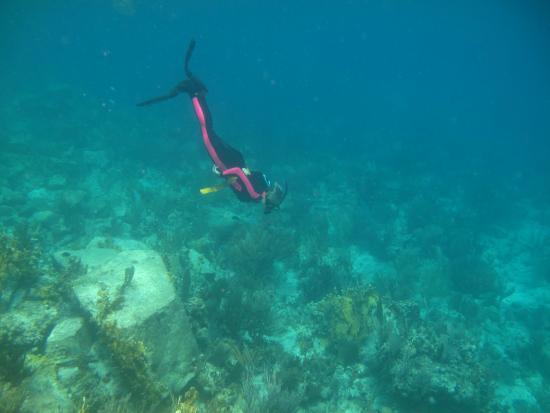 Wayward Sailor: free diving