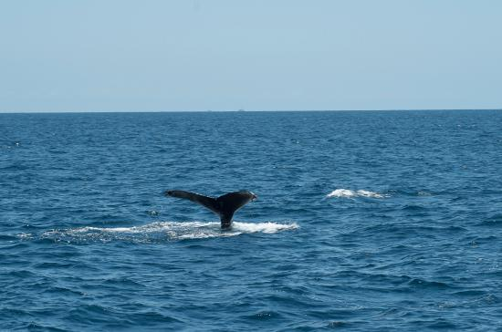 Dana Point, CA: Whale waving his fin at us.