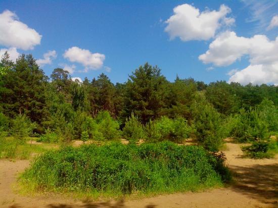 Serebryanyi Bor Park: Серебряный бор/ Нудистский пляж