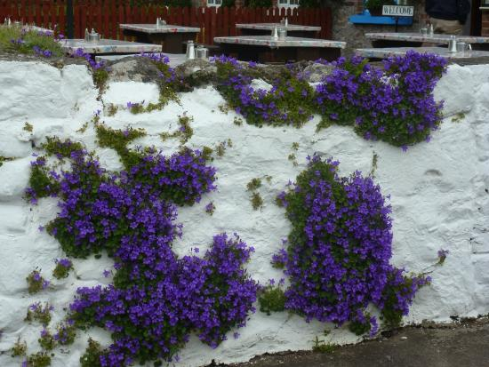 Adare Heritage Centre: Cottage fleuri