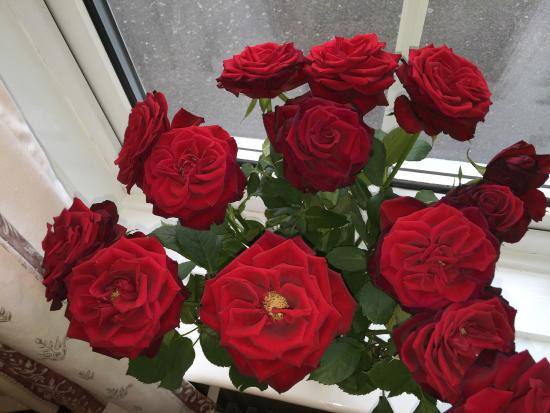 Surrone House: Roses at Window of Surrone Guest House