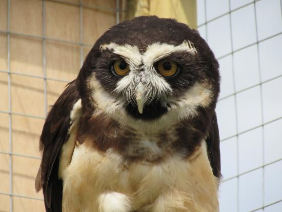 Penkridge, UK: Part of the resident World Owl Trust collection